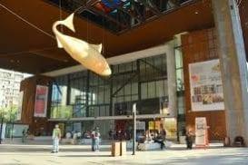 Abierta Primera Convocatoria del Plan de Apoyo a los Sectores de las Culturas